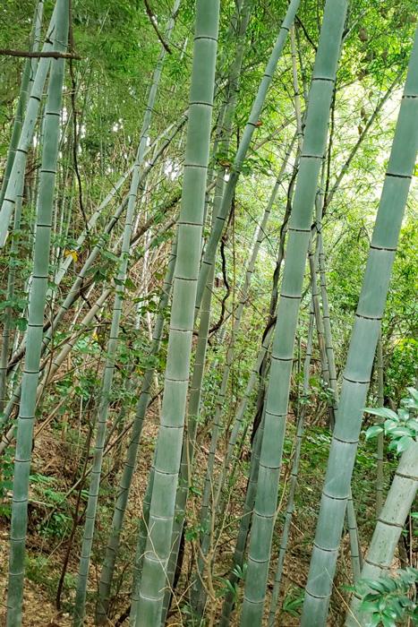 放置された竹林に繁茂する竹を整備